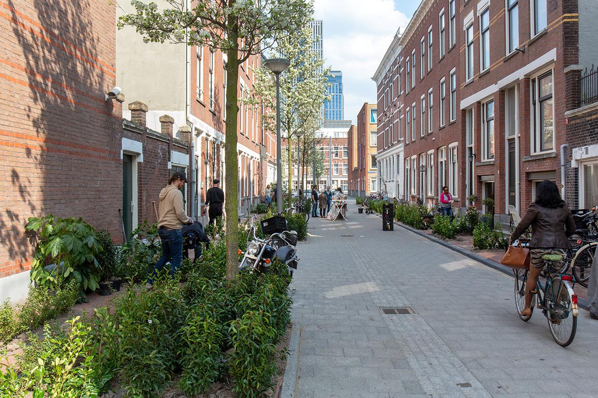 Oude Westen Rotterdam